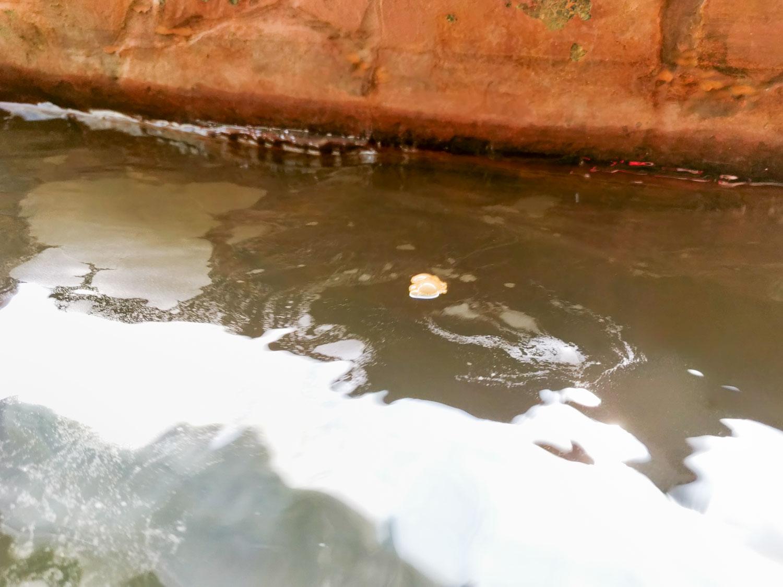 泡の湯温泉三好荘 黄色い泡