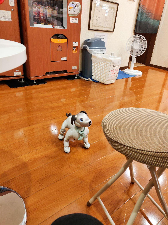 千年湯 犬ロボット