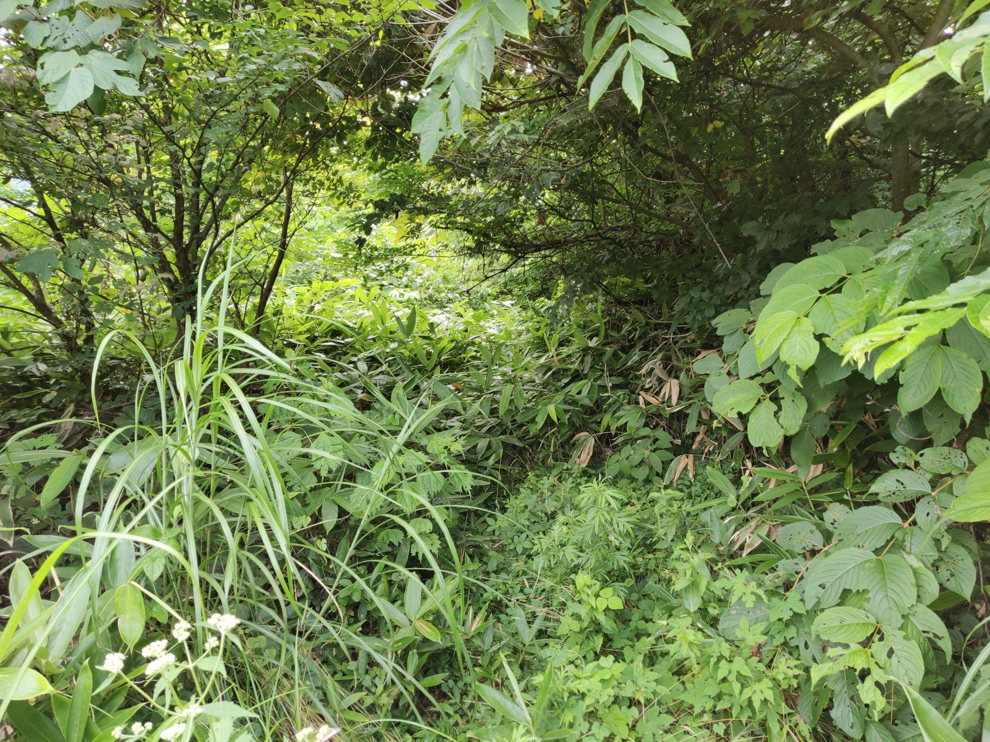 神瀧温泉入口の藪
