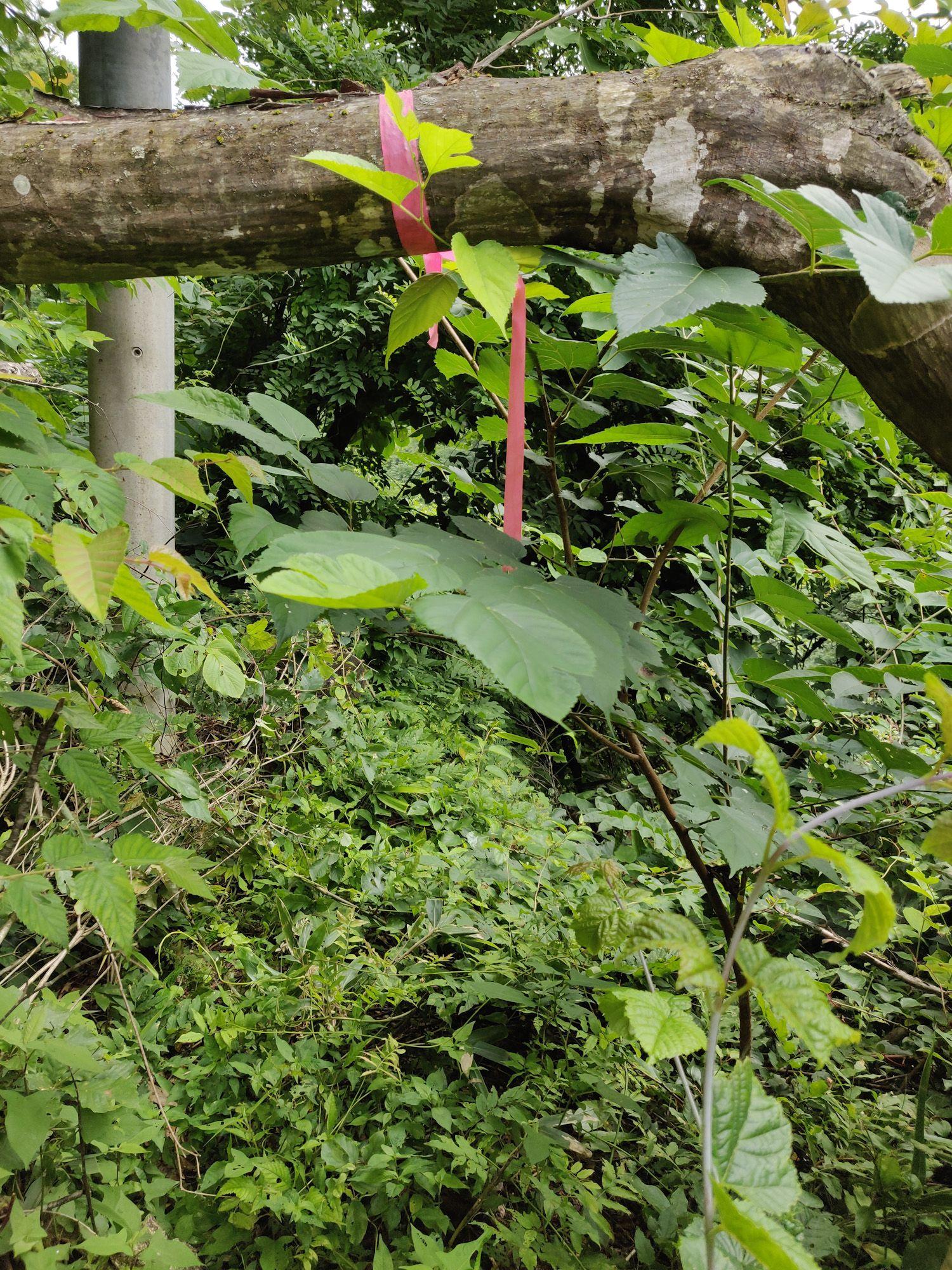 神瀧温泉の藪漕ぎ